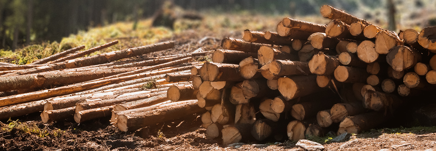 Industry Banner Forestry (1440x500) 2